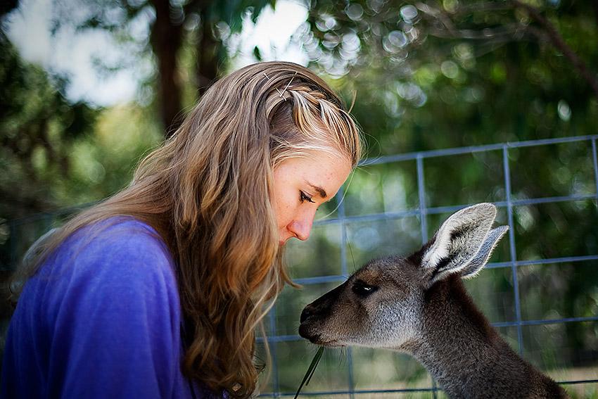 Kangaroos, Koalas, Cohunu Wildlife Park near Perth, Western Australia