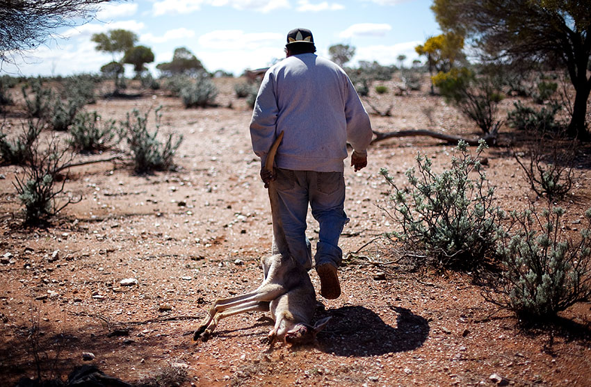 Kangaroo hunting near Mt. Margaret, Western Australia.
