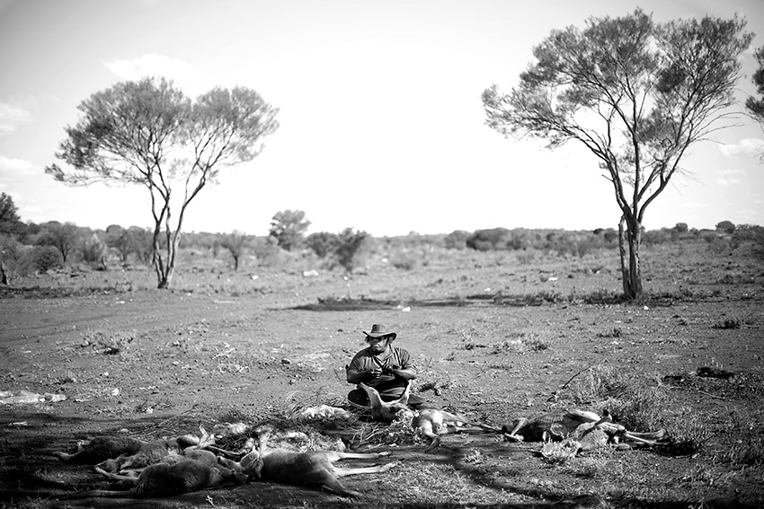 Australia Kangaroo Hunting