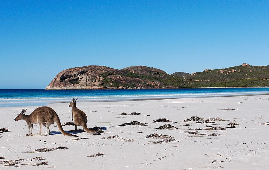 Drive From Adelaide To Kangaroo Island
