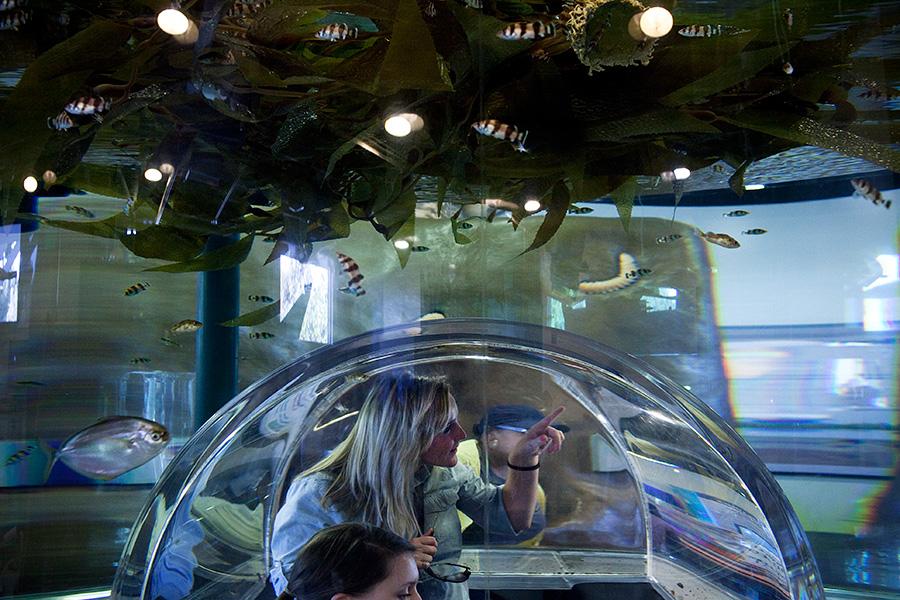 Exploring The Cabrillo Marine Aquarium The Blog Of