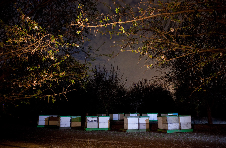 Bee boxes at night in Bakersfield