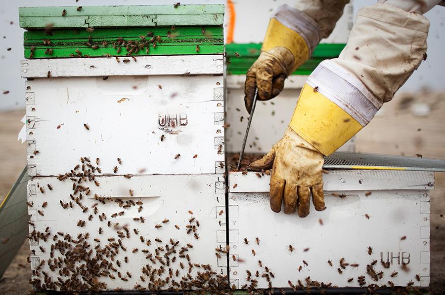 Beehive bee box