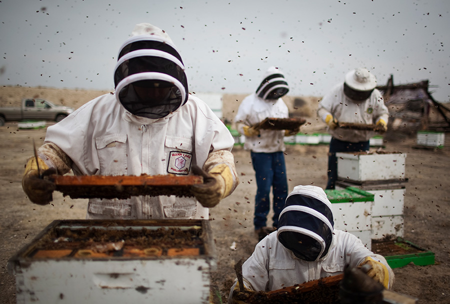 beekeepers and beehives in bakersfield