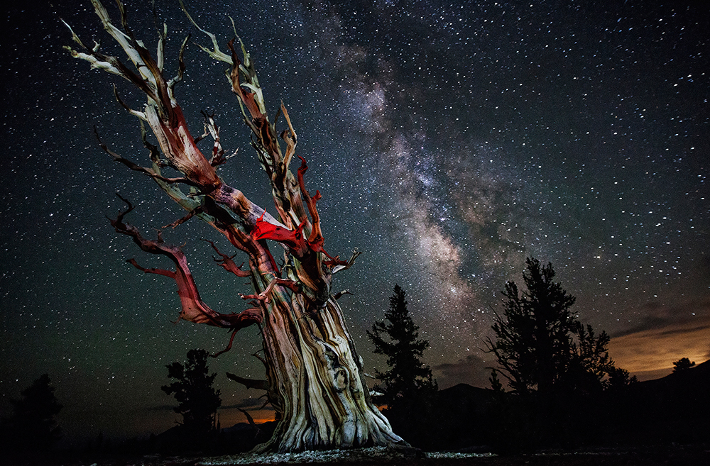 Ancient Bristlecone Pine Forest Milky Way Stars