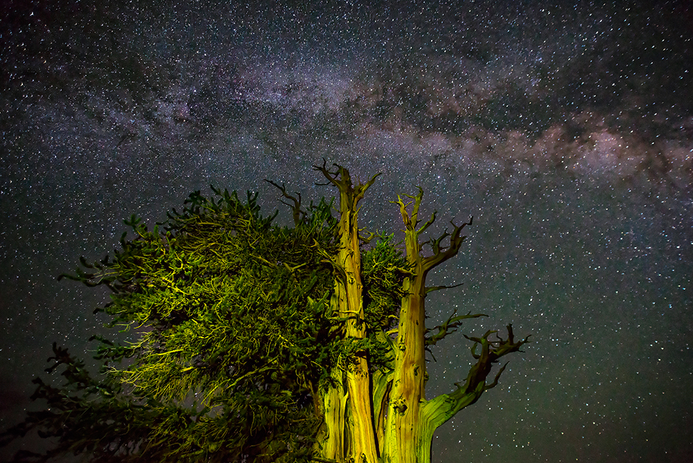 Ancient Bristlecone Pine Forest Milky Way Stars Patriarch Grove